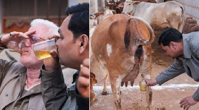 "Zio-Style Political Correctness Hits Pakistan: Punjab Information Minister Fayyaz Chohan Resigns After Truthfully Calling Hindus ""Cow Urine Drinkers"""